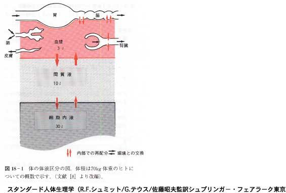 4つの排泄系統/自然療法とエドガー・ケイシー療法のクシロ薬局 4つの排泄系統 4つの排泄系エドガ